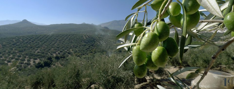 La Fortaleza Andaluza en el Medio Rural